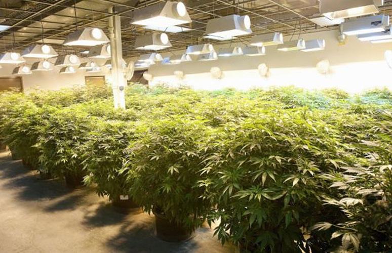 marijuana-gallery-2